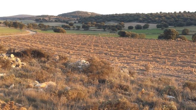 Finca con plantacion de encinas truferas