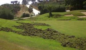 Daños por jabalíes en campo golf